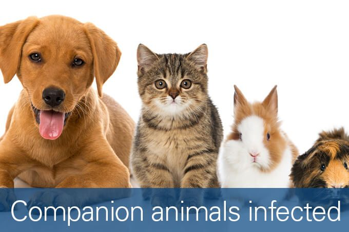 companion animals infected